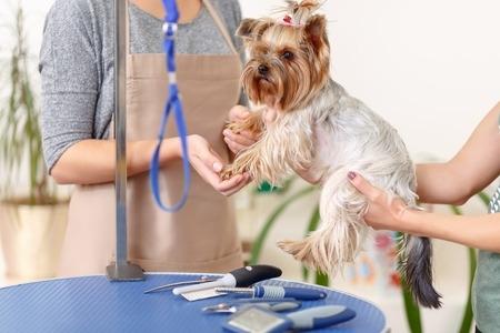 Small Dog at Grooming Salon