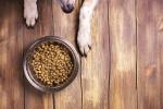 Dog and bowl of food